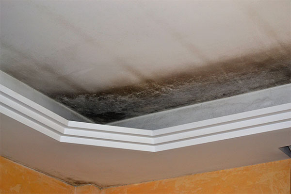 Idaho Crawl Space & Attic Encapsulation After Mold Abatement