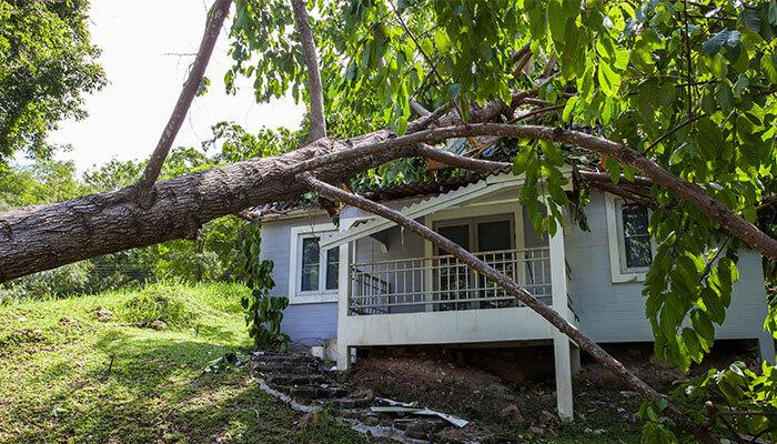 Tree & Debris Removal