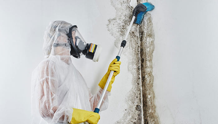 Mold-Damaged Property Restoration