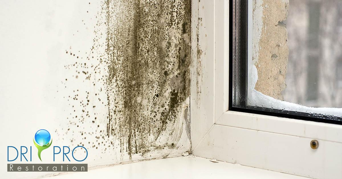 Mold Removal in Alys Beach, FL
