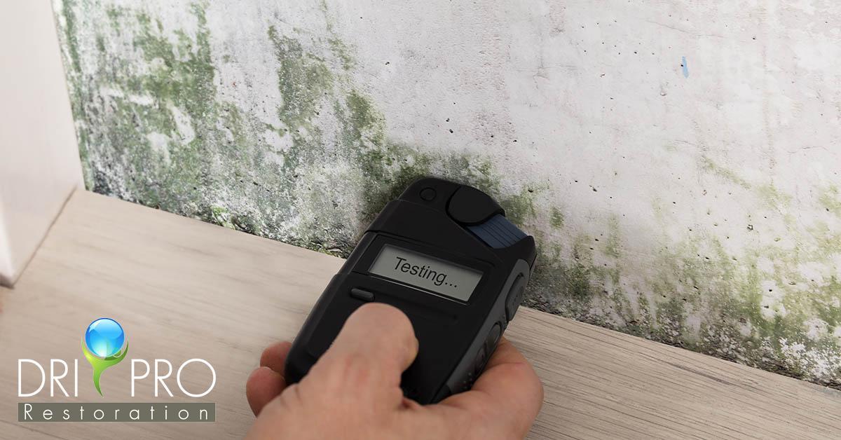 Mold Removal in Sandestin, FL