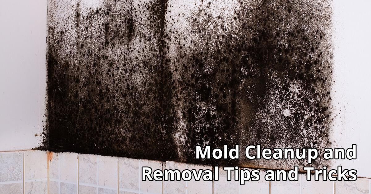 Mold Remediation Tips in Destin, FL