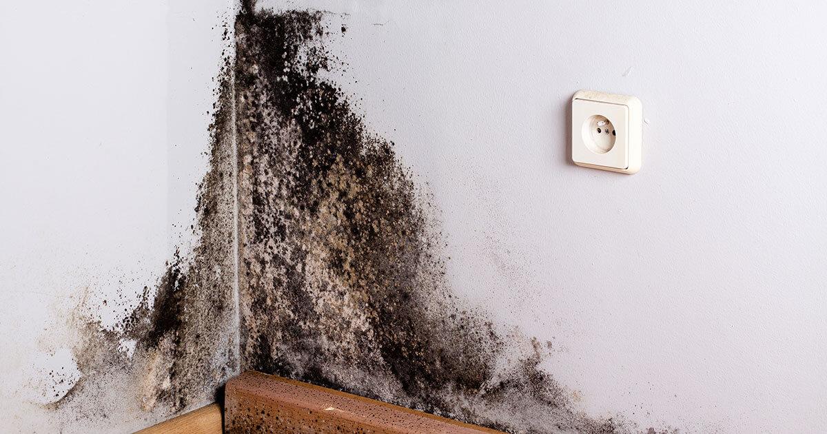 Mold Mitigation in Freeport, FL