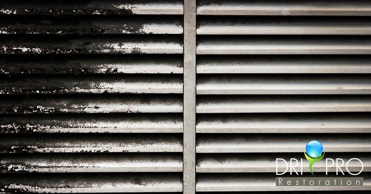 Professional Mold Mitigation in Panama City, FL