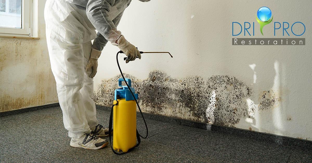 Certified Mold Damage Restoration in Okaloosa County, FL