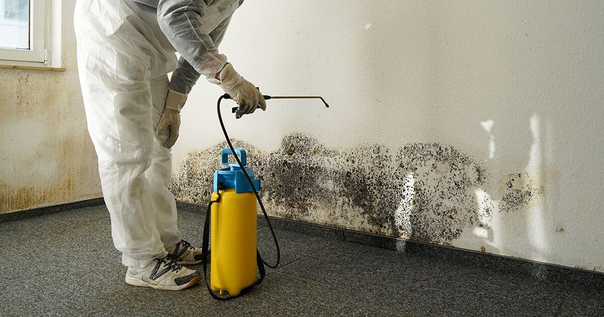 Mold Mitigation in Shalimar, FL