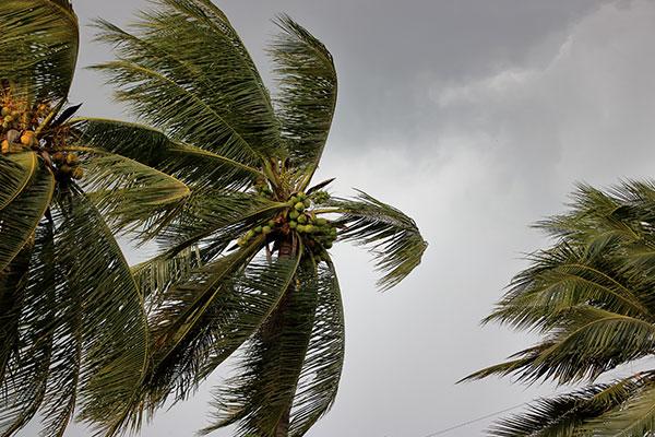 Storm Damage in Santa Rosa Beach, FL