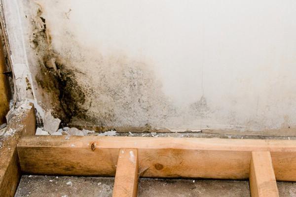 Mold Remediation in Boston, MA