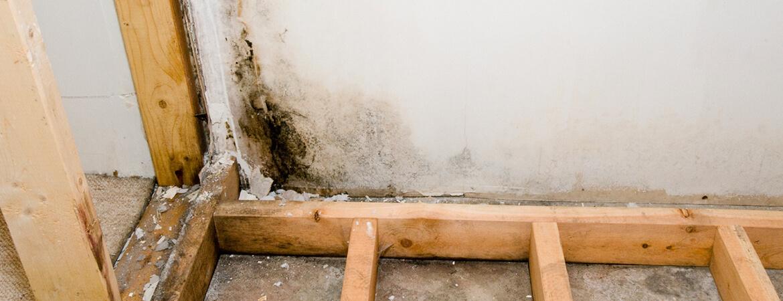 Mold Remediation & Removal in Boston, MA