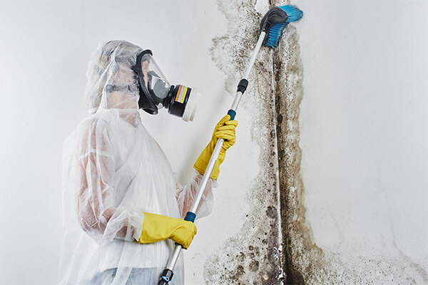 Mold Remediation in Needham, MA