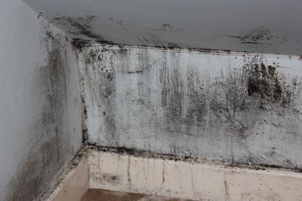 Mold Mitigation in Westwood, MA
