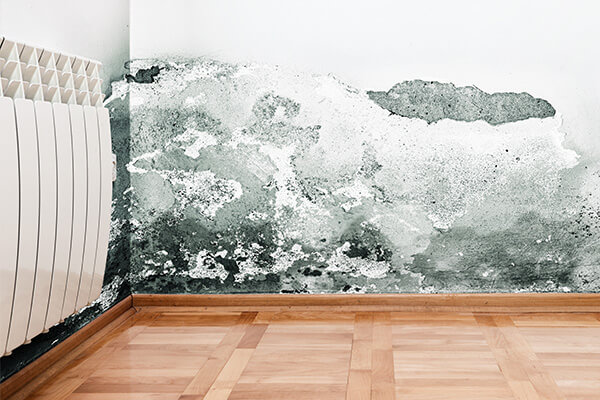 Mold Damage Restoration in Needham, MA