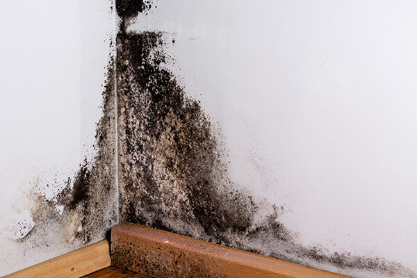 Mold Damage Restoration in Chelsea, MA