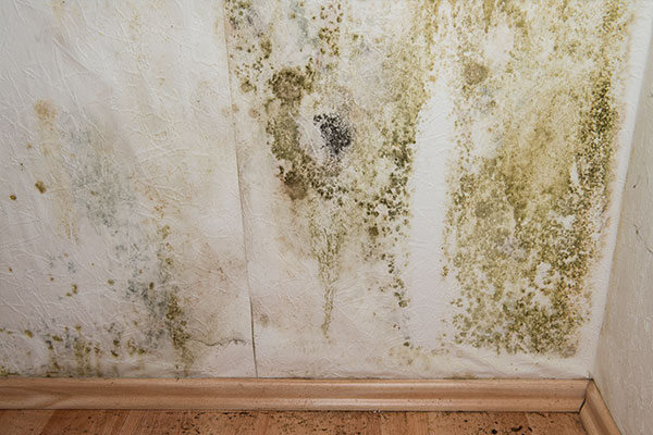 Disaster Restoration Services Mold Remediation