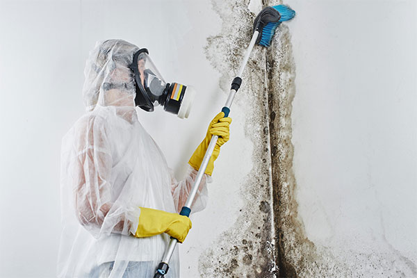 Quantum Restoration Services Mold Removal