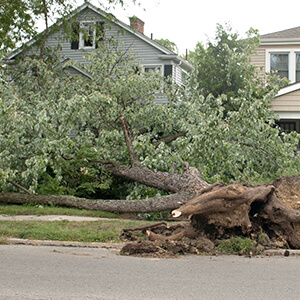 Storm Debris Cleanup, Tree Removal and Roof Repair in Mentor, OH